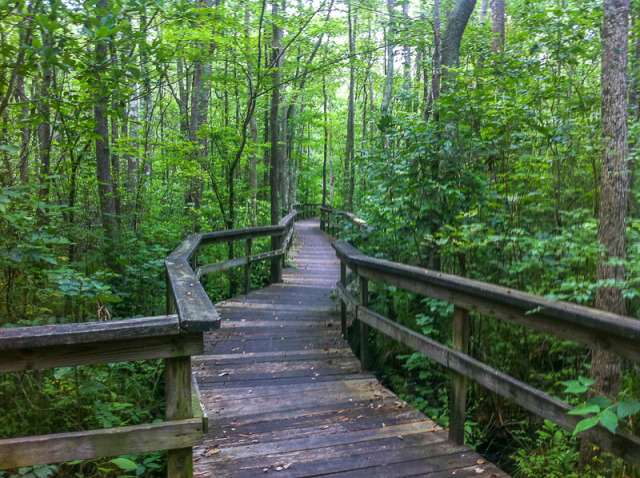Pocomoke Forest - most haunted forest in Maryland