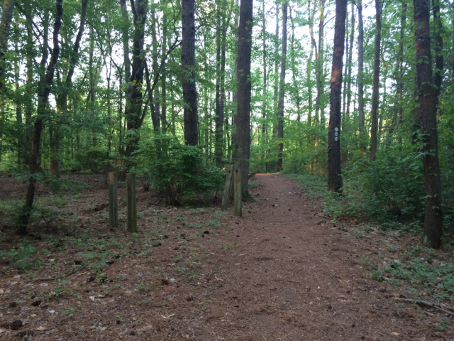 Pocomoke Forest most haunted forest in Maryland