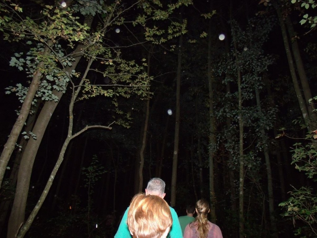 Guests in the Forest on the Pocomoke Ghost Walk
